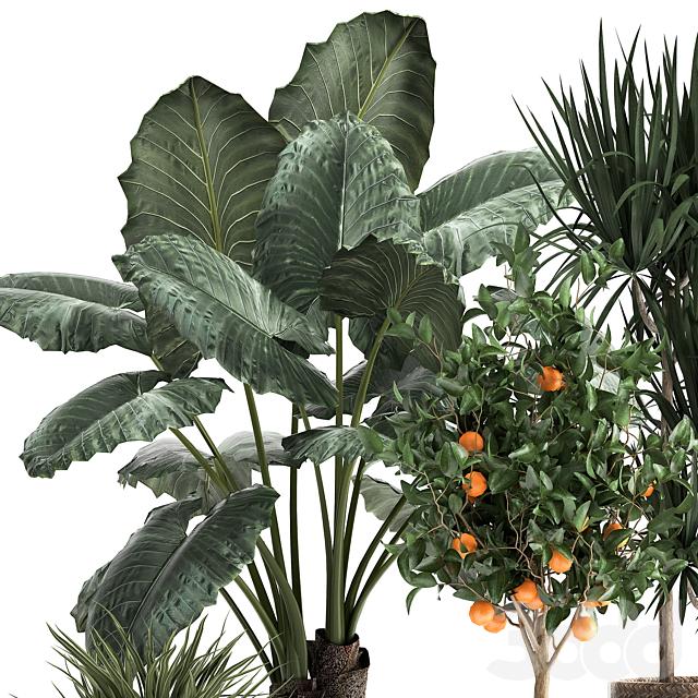 Коллекция растений 1002.